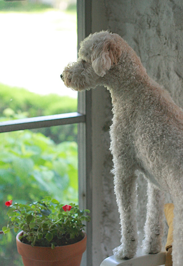 Porch-pup